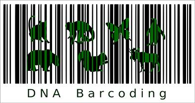 DNA barcoding. Imatge de Jagoba Malumbres